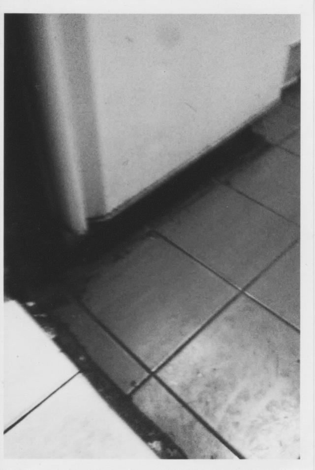 © Romina Sandoval Rojas - Glosar las paredes
