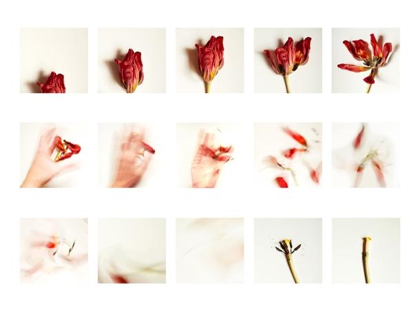 © Mireia Alises - Fra-gi-li-tat