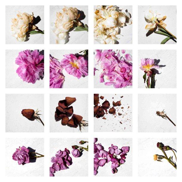 © Núria Espuis - Herbarium