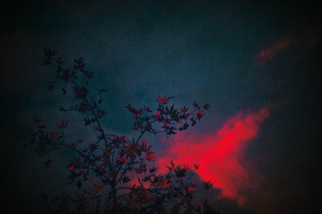 © Virginia Palomares - Branches on a pink pillow
