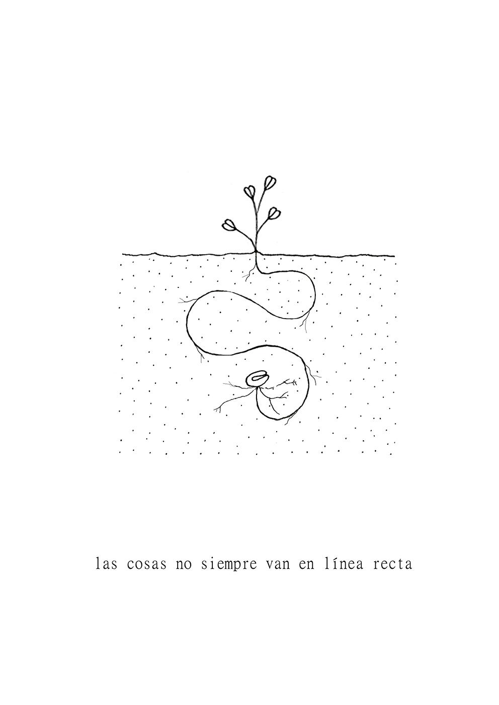 © Laura Rey - Planta curva
